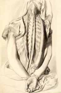 Anatomie, ruggenwervel, De Lairesse