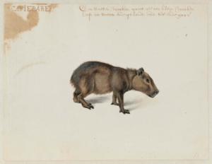 Post_Capybara